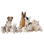 Как выбрать породу собаки